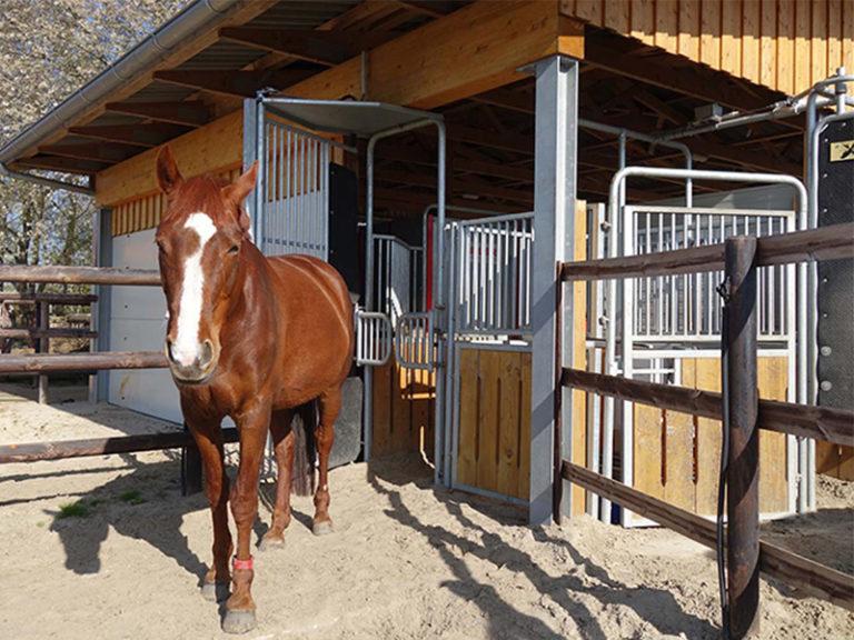 Pferde_Fütterungstechnik