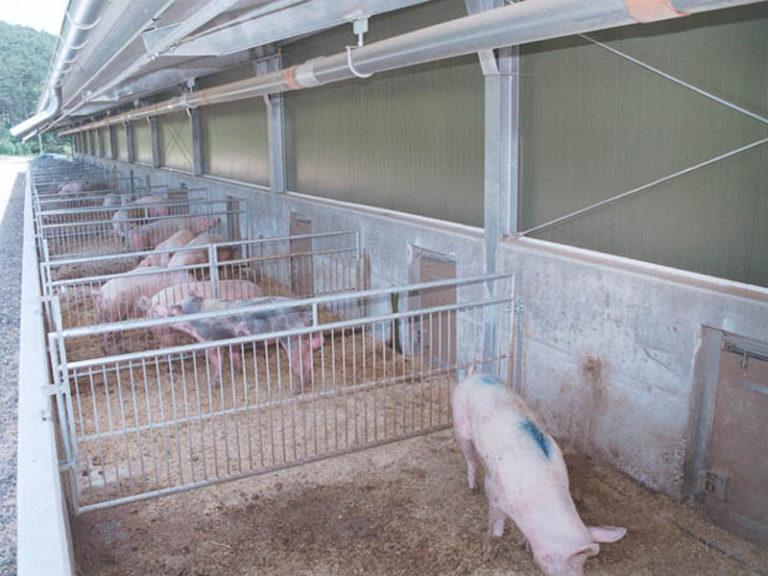 Schwein_Stallung
